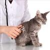 Ветеринарные клиники в Кондрово